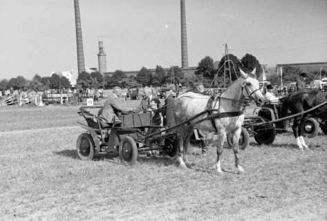 ARH NL Dierssen 1049/0023, Reitturnier, Springe, 1950