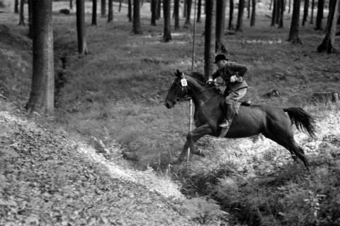 ARH NL Dierssen 1049/0027, Reitturnier, Springe, 1950
