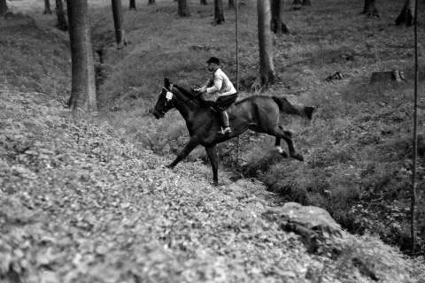 ARH NL Dierssen 1049/0028, Reitturnier, Springe, 1950