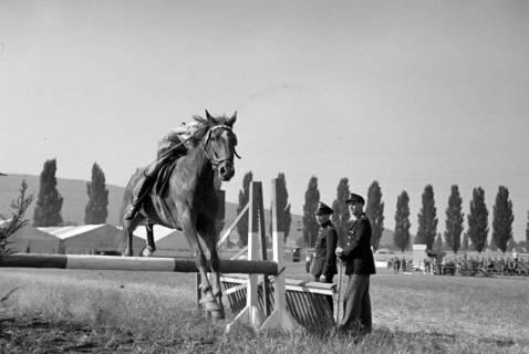 ARH NL Dierssen 1050/0006, Reitturnier, Springe, 1950