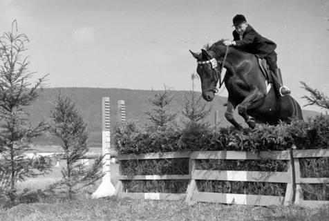 ARH NL Dierssen 1050/0020, Reitturnier, Springe, 1950