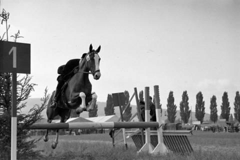 ARH NL Dierssen 1050/0022, Reitturnier Springe, 1950