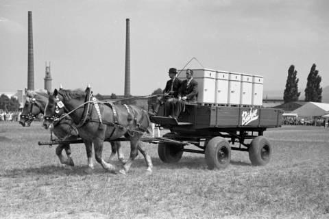 ARH NL Dierssen 1050/0031, Reitturnier, Springe, 1950