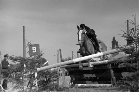 ARH NL Dierssen 1051/0002, Reitturnier, Springe, 1950