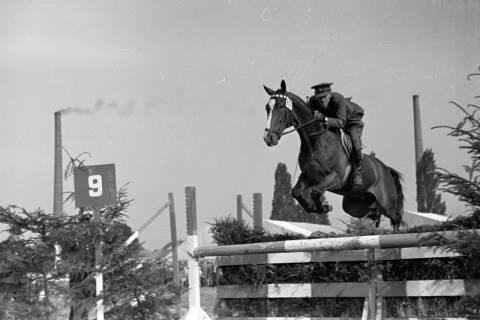 ARH NL Dierssen 1051/0005, Reitturnier, Springe, 1950