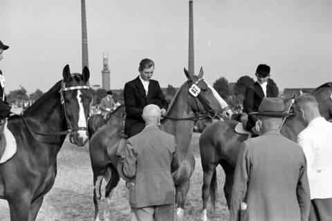 ARH NL Dierssen 1051/0007, Siegerehrung auf einem Reitturnier, Springe, 1950