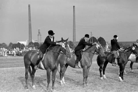 ARH NL Dierssen 1051/0012, Reitturnier, Springe, 1950