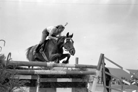 ARH NL Dierssen 1051/0021, Reitturnier, Springe, 1950