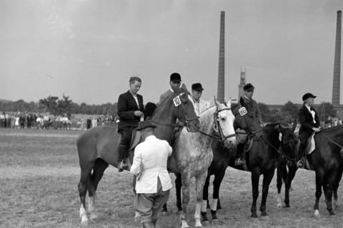ARH NL Dierssen 1051/0023, Reitturnier, Springe, 1950