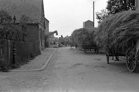 ARH NL Dierssen 1068/0005, Lohndreschen bei Schnelle, Springe, 1950