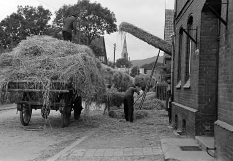 ARH NL Dierssen 1068/0006, Lohndreschen bei Schnelle, Springe, 1950