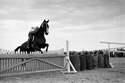 ARH NL Dierssen 1074/0004, Reitturnier, Eldagsen, 1950