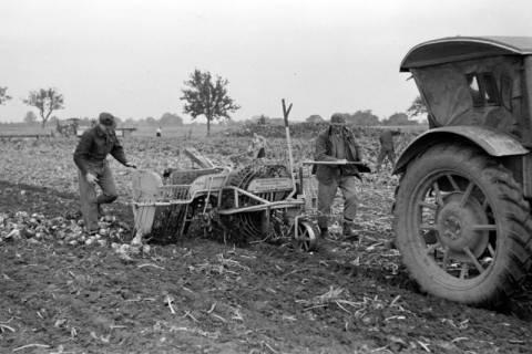 ARH NL Dierssen 1079/0007, Rübenernte mit Vollmaschine, Rössing, 1950