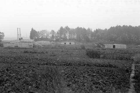 ARH NL Dierssen 1084/0009, Alte Baracken der Luther-Werke, Steinkrug, 1950