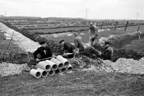 ARH NL Dierssen 1098/0024, Drainagearbeiten, Höver, 1950