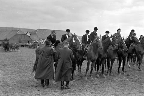 ARH NL Dierssen 1135/0004, Reiterfest, Springe, 1951