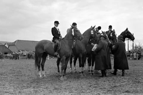 ARH NL Dierssen 1135/0006, Reiterfest, Springe, 1951