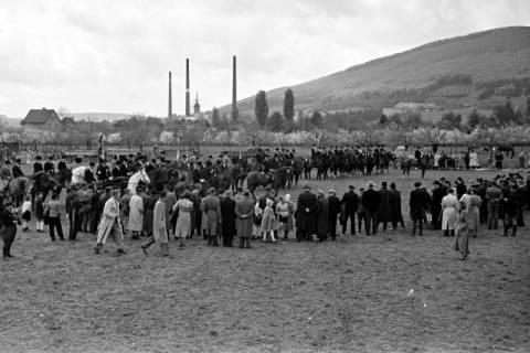 ARH NL Dierssen 1135/0008, Reiterfest, Springe, 1951