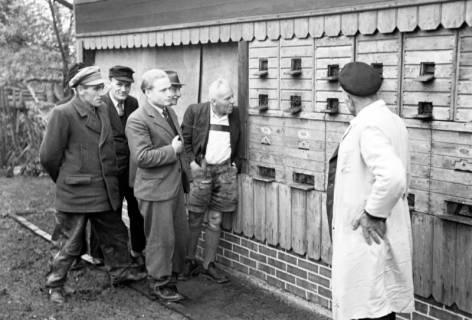 ARH NL Dierssen 1136/0009, Bienenschau, Flegessen, 1951