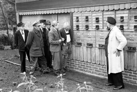 ARH NL Dierssen 1136/0010, Bienenschau, Flegessen, 1951