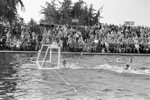 ARH NL Dierssen 1156/0003, Deutsche Wasserballmeisterschaft, Hannover, 1951