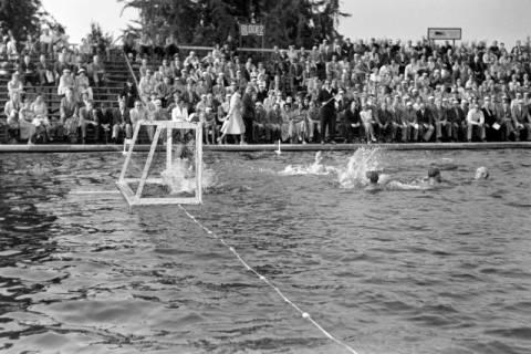 ARH NL Dierssen 1156/0006, Deutsche Wasserballmeisterschaft, Hannover, 1951