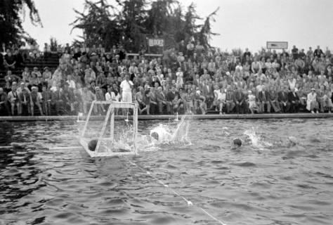 ARH NL Dierssen 1156/0014, Deutsche Wasserballmeisterschaft, Hannover, 1951