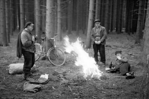 ARH NL Dierssen 1161/0015, Zapfensammler, Westerhof, 1951