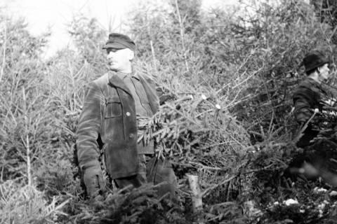 ARH NL Dierssen 1163/0010, Weihnachtsbaumernte, Springe, 1951