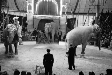 ARH NL Dierssen 1178/0001, Elefanten im Cirkus Busch aus Berlin, Seesen, 1952