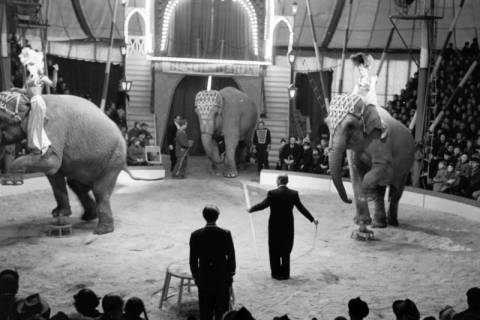 ARH NL Dierssen 1178/0002, Elefanten im Cirkus Busch aus Berlin, Seesen, 1952