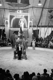 ARH NL Dierssen 1178/0003, Elefanten im Cirkus Busch aus Berlin, Seesen, 1952