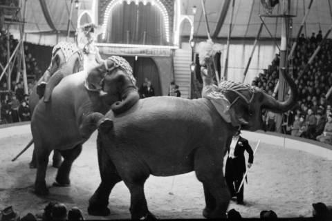 ARH NL Dierssen 1178/0004, Elefanten im Cirkus Busch aus Berlin, Seesen, 1952