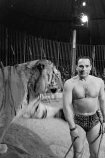 """ARH NL Dierssen 1178/0006, """"Tarzan mit Tiger"""" im Cirkus Busch aus Berlin, Seesen, 1952"""