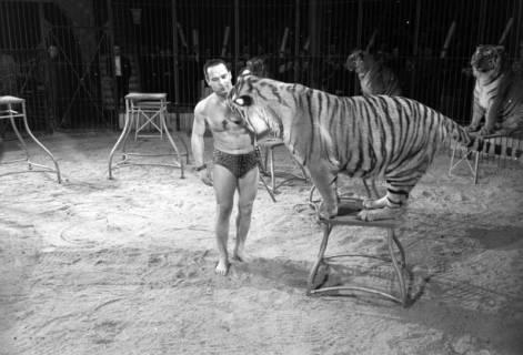 """ARH NL Dierssen 1178/0011, """"Tarzan mit Tiger"""" im Cirkus Busch aus Berlin, Seesen, 1952"""