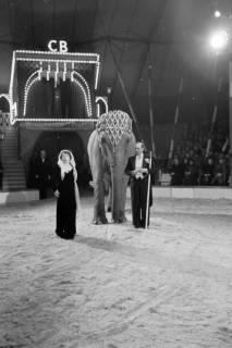 ARH NL Dierssen 1178/0013, Elefanten im Cirkus Busch aus Berlin, Seesen, 1952