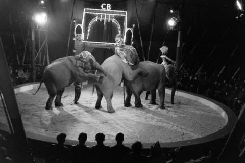 ARH NL Dierssen 1178/0014, Elefanten im Cirkus Busch aus Berlin, Seesen, 1952