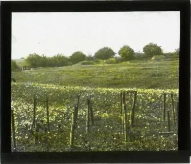 ARH NL Kageler 105, 1. Weltkrieg, Artilleriestellung, Mailly, Frankreich, zwischen 1914/1918