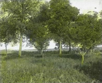 ARH NL Kageler 107, 1. Weltkrieg, eigene Stellung in Mailly, Frankreich, zwischen 1914/1918