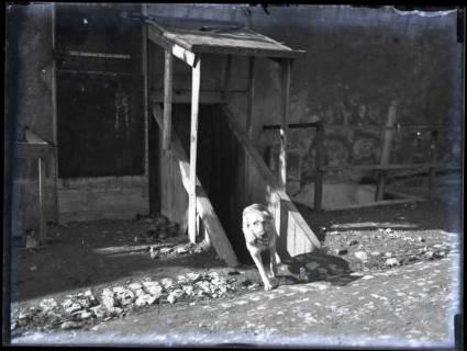 ARH NL Kageler 208, 1. Weltkrieg, Meldehund, Frankreich, zwischen 1914/1918