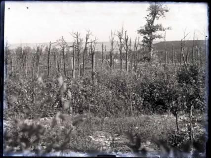 ARH NL Kageler 219, 1. Weltkrieg, neues Grün, Priesterwald (Bois-le-Prêtre), Frankreich, zwischen 1914/1918