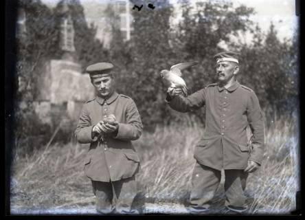 ARH NL Kageler 221, 1. Weltkrieg, Brieftauben in Mailly, Frankreich, zwischen 1914/1918