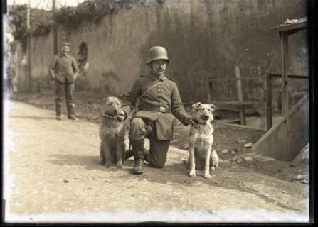 ARH NL Kageler 224, 1. Weltkrieg, Meldehunde in Mailly, Frankreich, zwischen 1914/1918