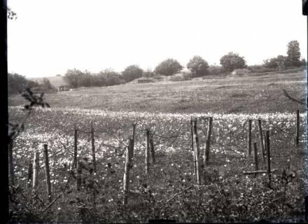 ARH NL Kageler 244, 1. Weltkrieg, Artilleriestellung, Mailly, Frankreich, zwischen 1914/1918
