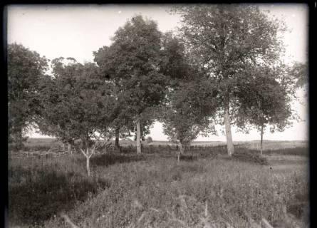 ARH NL Kageler 246, 1. Weltkrieg, eigene Stellung in Mailly, Frankreich, zwischen 1914/1918