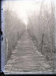 ARH NL Kageler 259, 1. Weltkrieg, Rutenweg im Waldlager, Bois de Rayi, Frankreich, zwischen 1914/1918