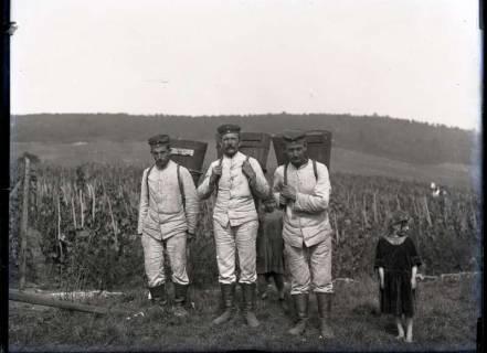 ARH NL Kageler 309, 1. Weltkrieg, Soldaten bei der Weinlese in Ars-sur-Moselle, Frankreich, zwischen 1914/1918