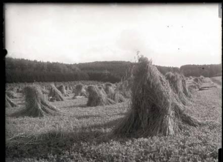ARH NL Kageler 348, Gehrdener Berg, Gehrden, zwischen 1914/1918