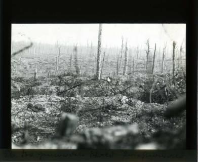 """ARH NL Kageler 354, 1. Weltkrieg, der """"gerodete"""" Wald, Priesterwald (Bois-le-Prêtre), Frankreich, zwischen 1914/1918"""