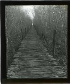 ARH NL Kageler 409, 1. Weltkrieg, Rutenweg im Waldlager, Bois de Rayi, Frankreich, zwischen 1914/1918